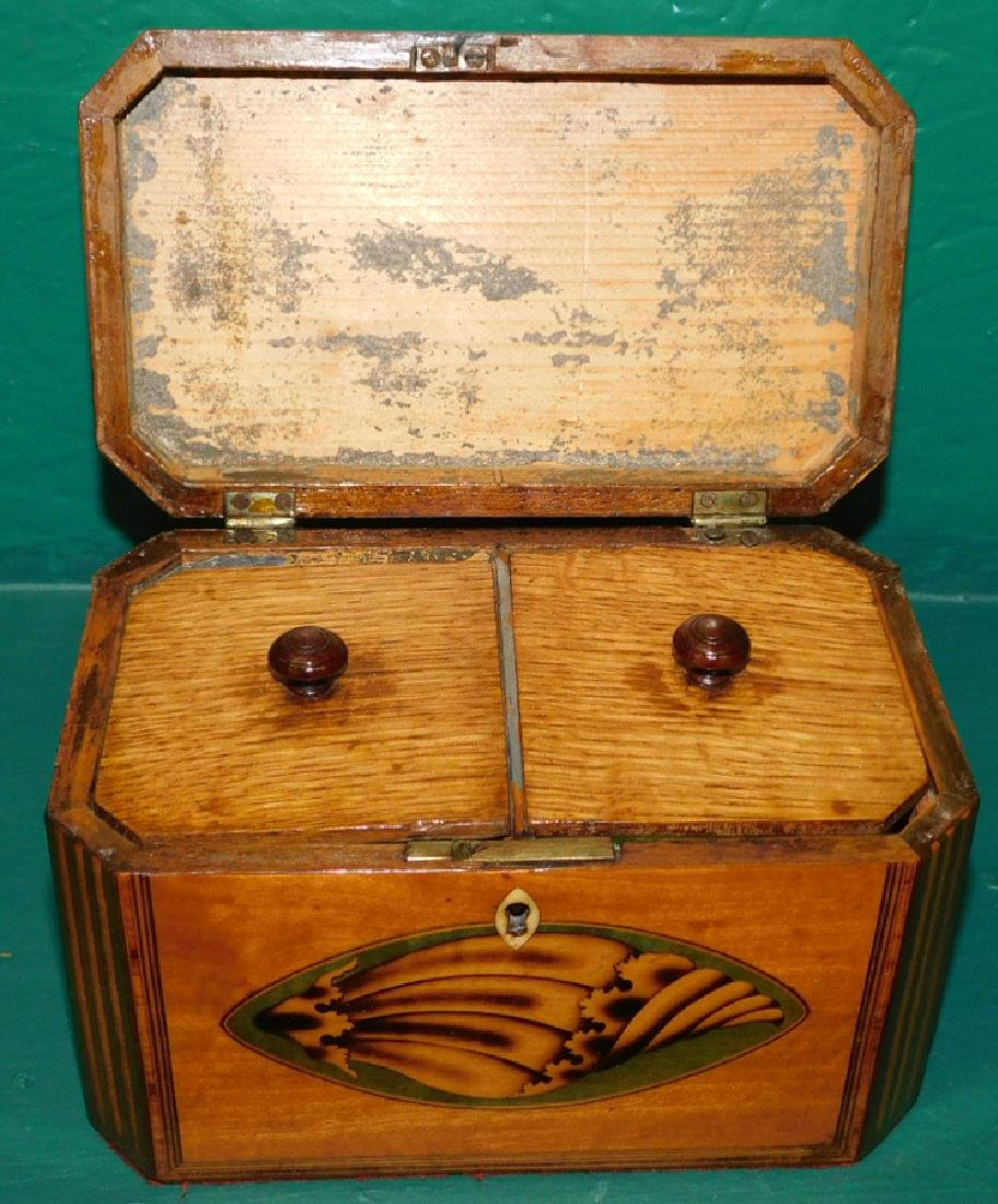 19th C Satinwood Double Conch Shell Tea Caddy - 2