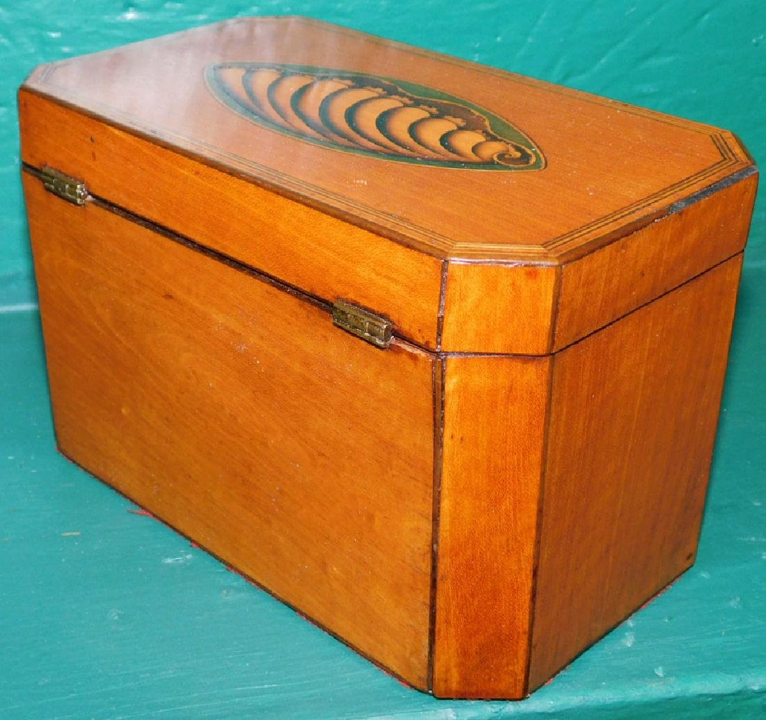 19th C Satinwood Double Conch Shell Tea Caddy - 3