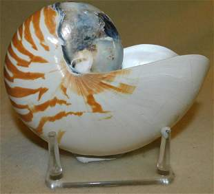 Sea Shell On Lucite Stand