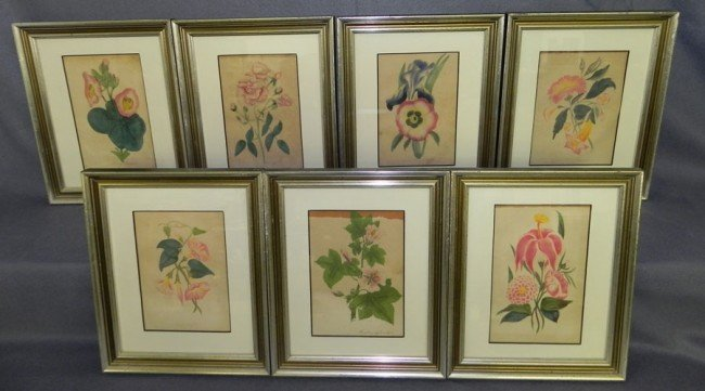 237: Set of (7) botanical colored engravings.