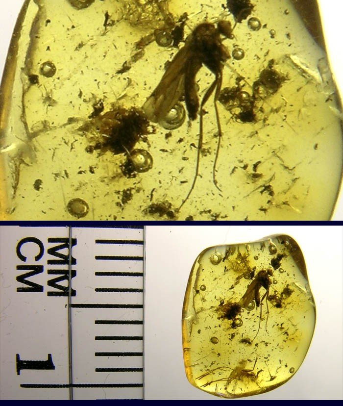 2: BALTIC AMBER FOSSIL W/ INSECT