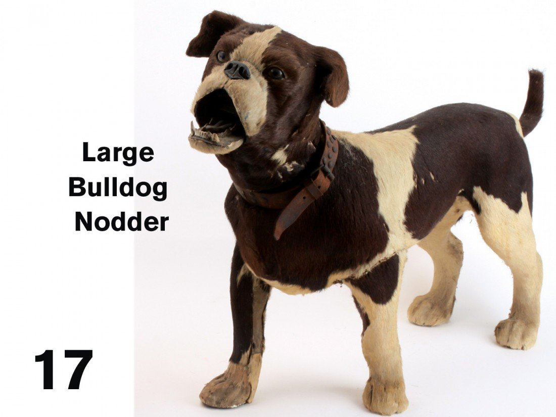 17: Large Bulldog Nodder