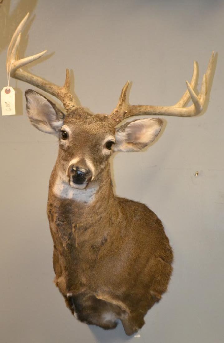 9 Point Buck Mount