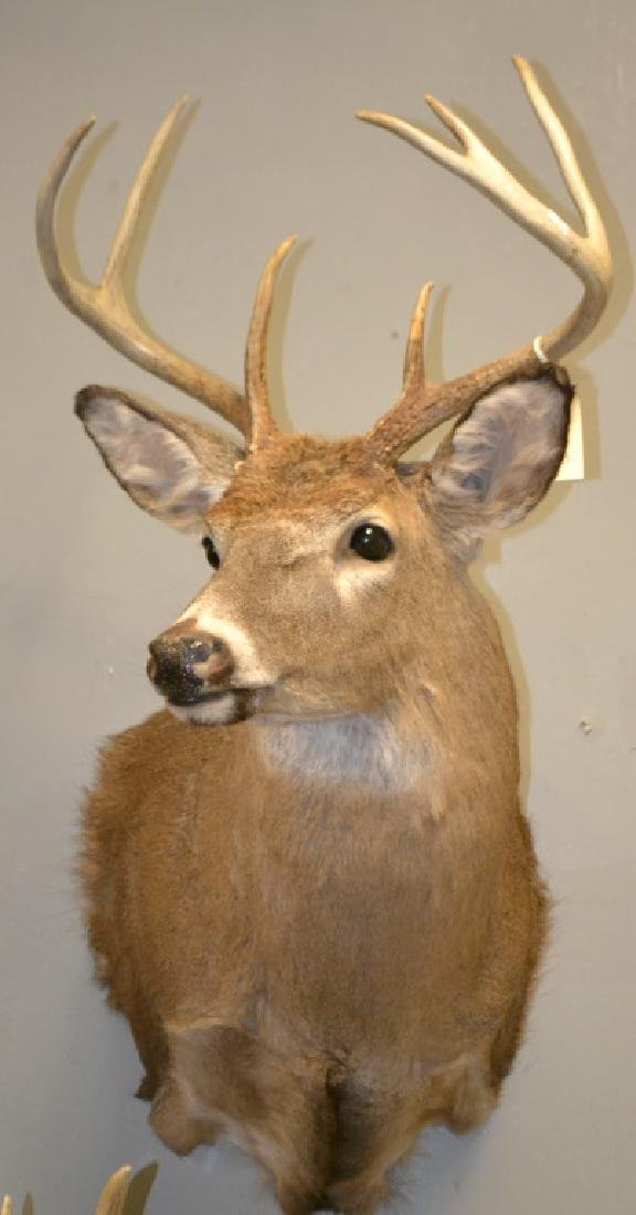 6 Point Buck Mount