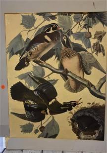 Large Folio Print of Wood Ducks