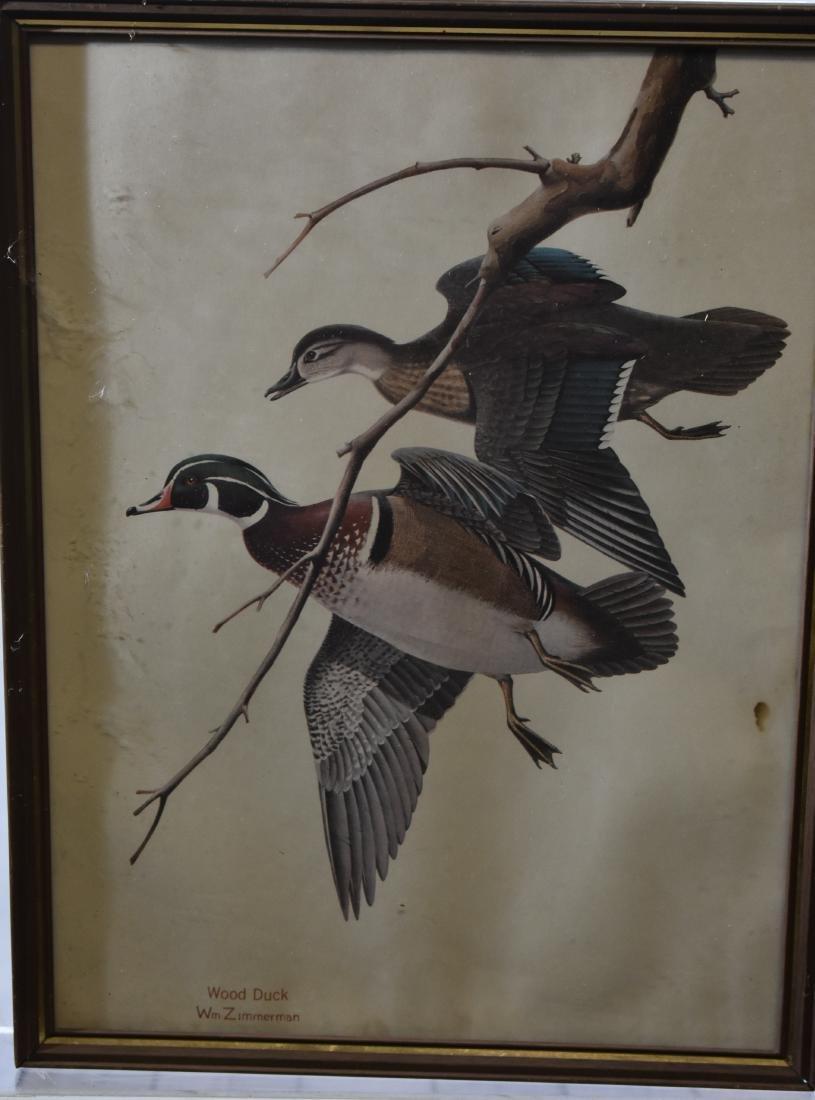 Four Framed Wildlife Prints - 6