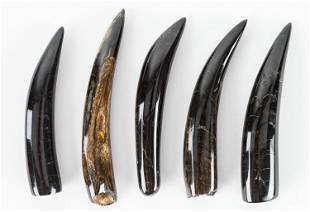Fossil Whale Tooth / Polished (5)