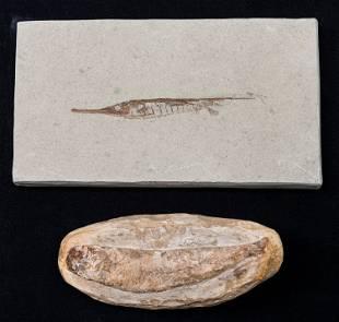 Ancient Fish Fossils (2)
