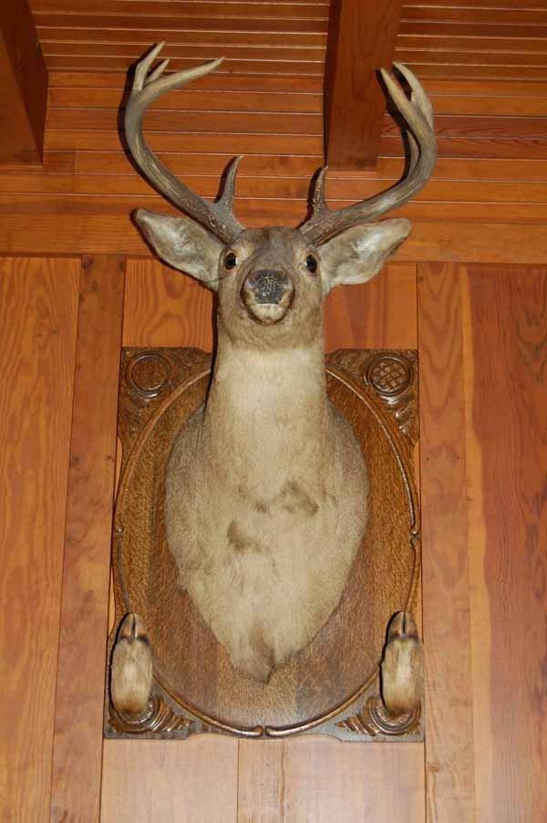 12: Whitetail Deer Mount with gun rack