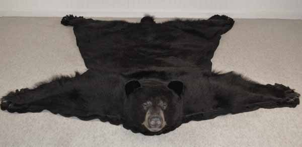 Black Bear Rug Mount