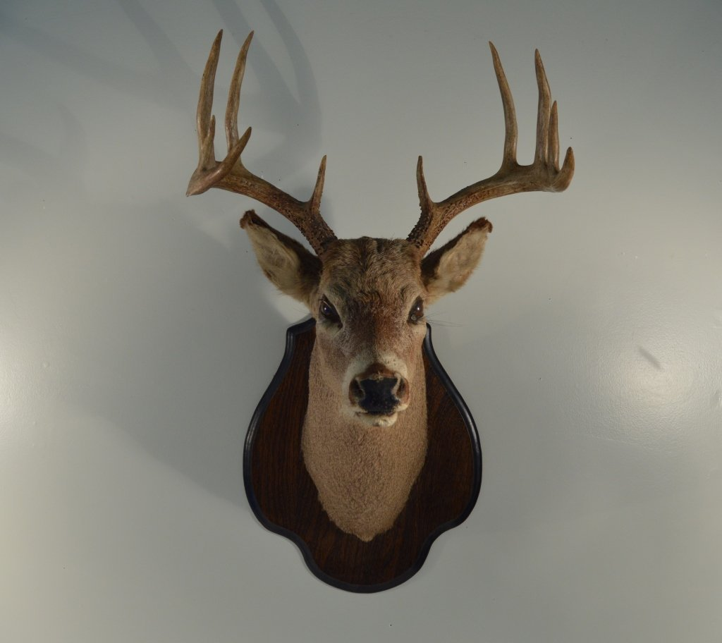 10pt Whitetail Buck on an Oak Shield Placque