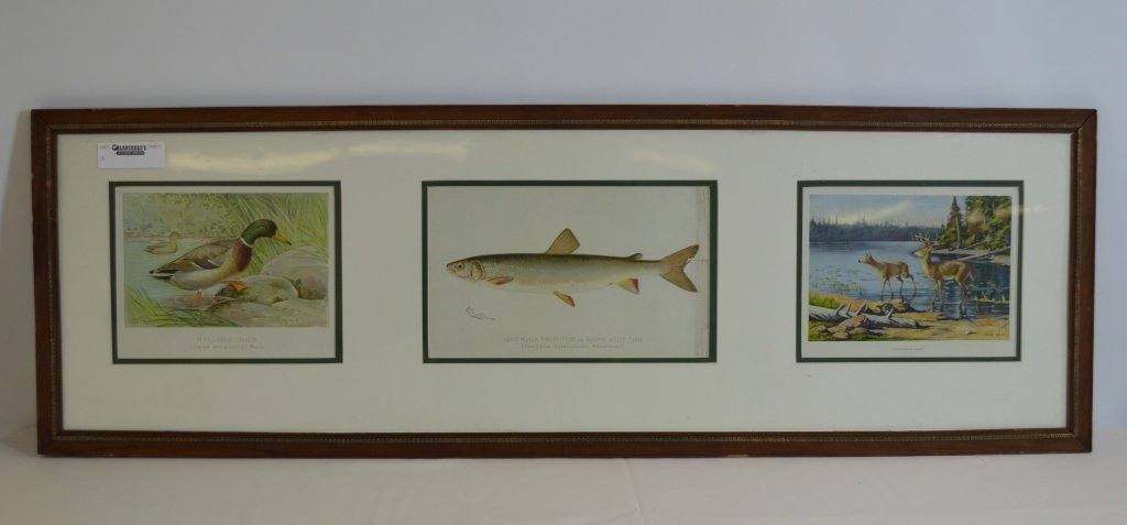 Mallard, Trout and Whitetail Deer Framed Prints