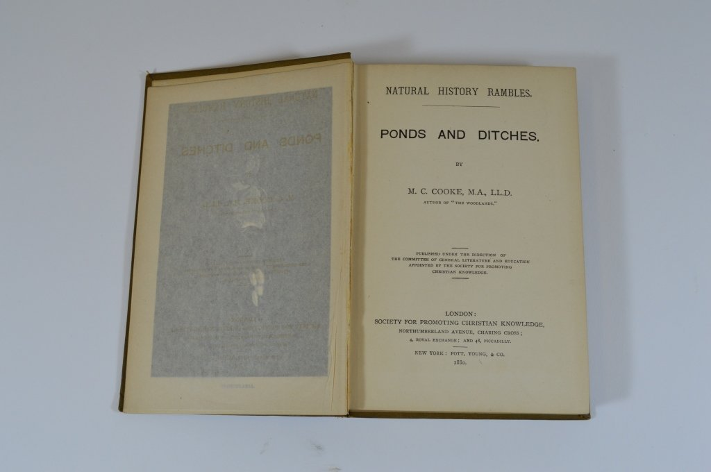 Natural History Rambles by M.C. Cooke 1880 - 2