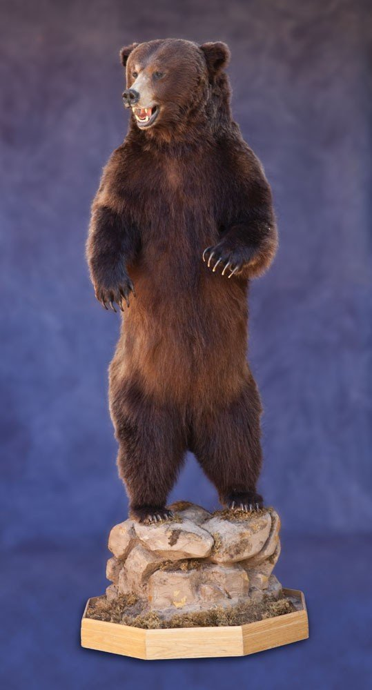 22: Full Body Mount Standing Grizzly Bear