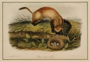 Audubon Original Print Royal Octavo Edition