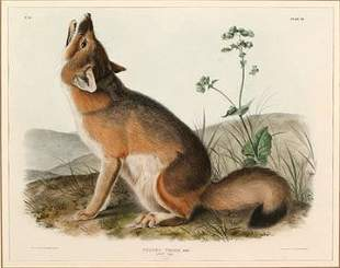 Audubon Original Print