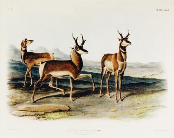 457: John James Audubon (1785-1851)