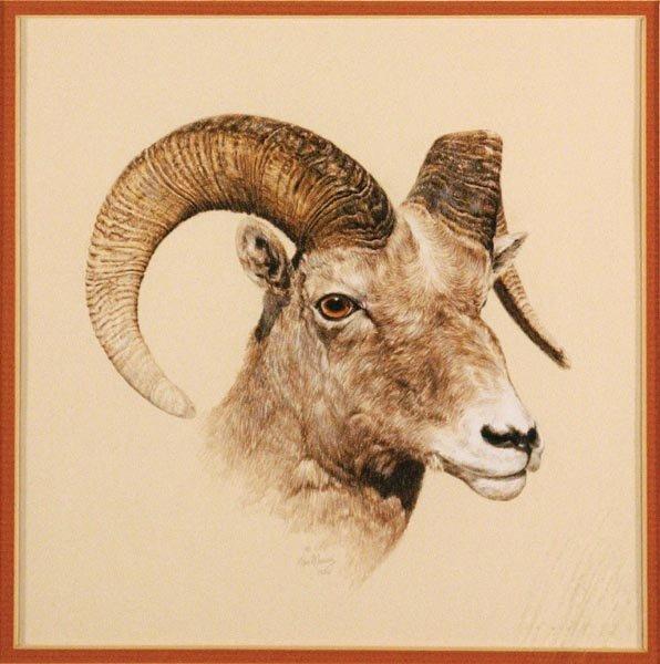 530: Bighorn Sheep by Tom Murray