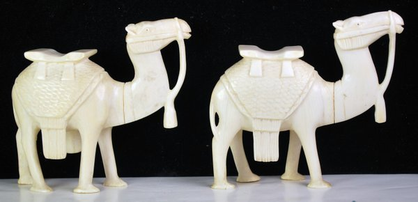 PAIR OF ANTIQUE CARVED IVORY CAMELS