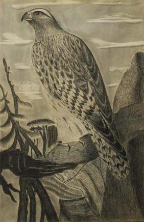 late 19th or early 20th c drawing of a hawk