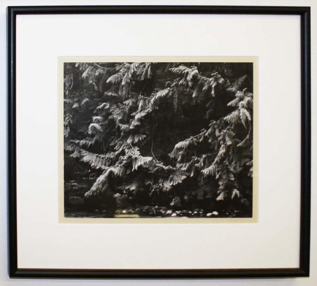 Ansel Adams (Am 1902-1984) Silver gelatin print