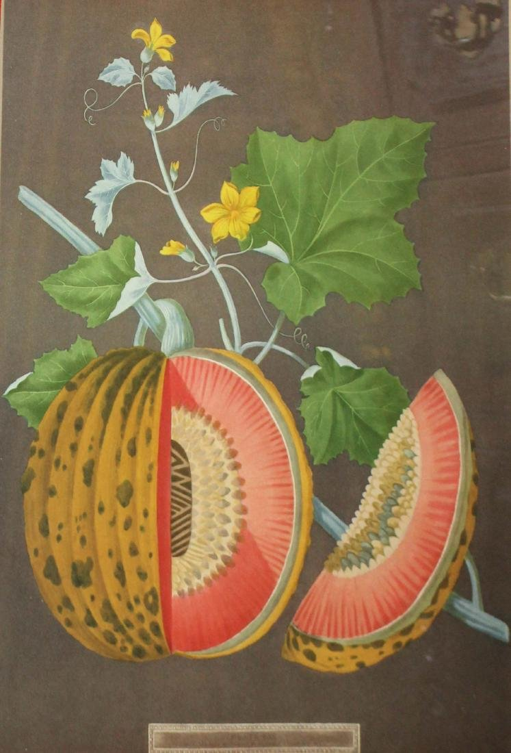 Pair of 19th c Chromolithographs of fruit - 3