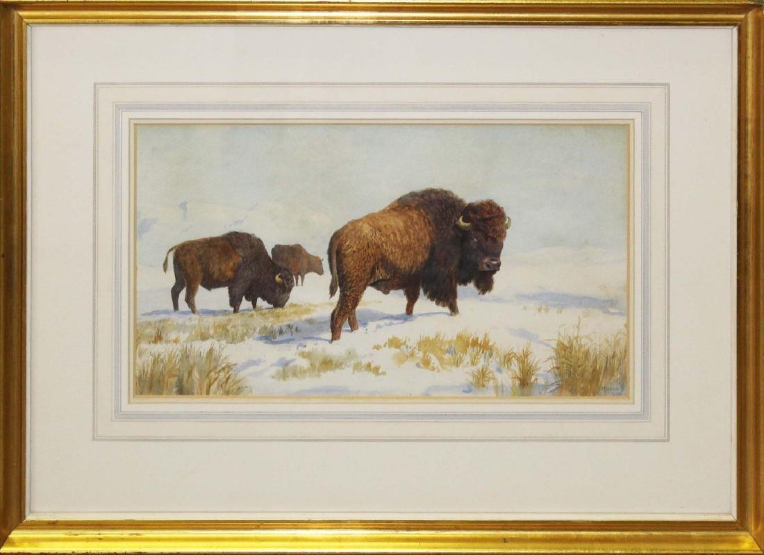 Harry Dixon (GB 1861-1942) Bison