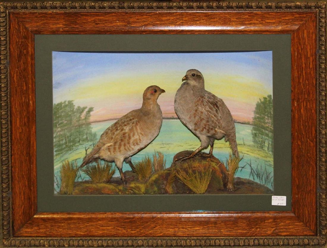 Ca. 1900 pair of taxidermy doves in artisan shadow