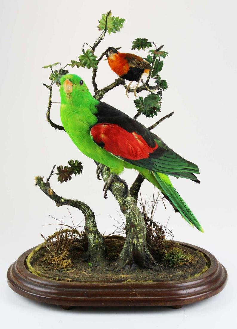 Victorian glass dome with taxidermy Victorian parrot.