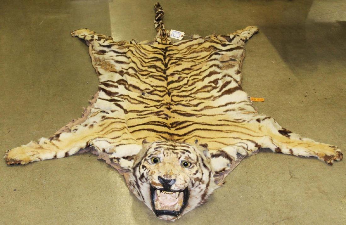 Ca 1900 Tiger rug