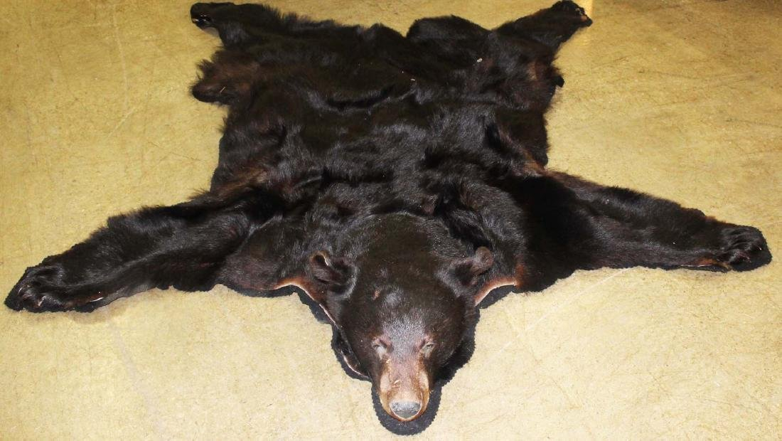 7 ft black bear skin rug