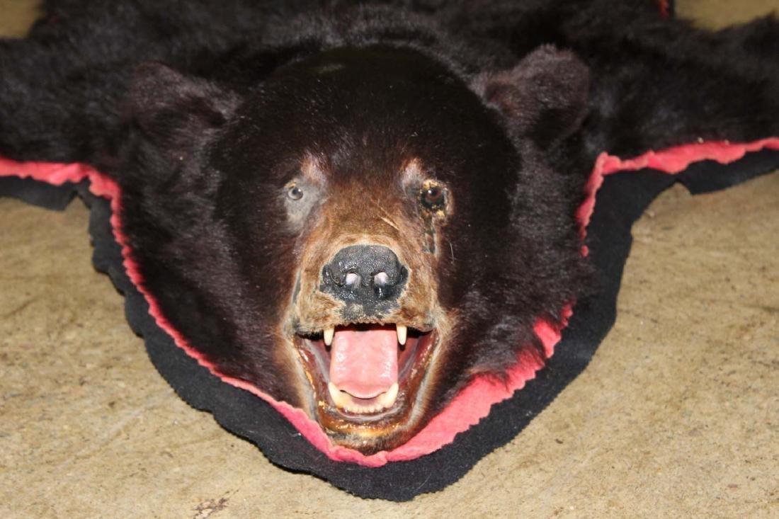 5 ft black bear skin rug - 2