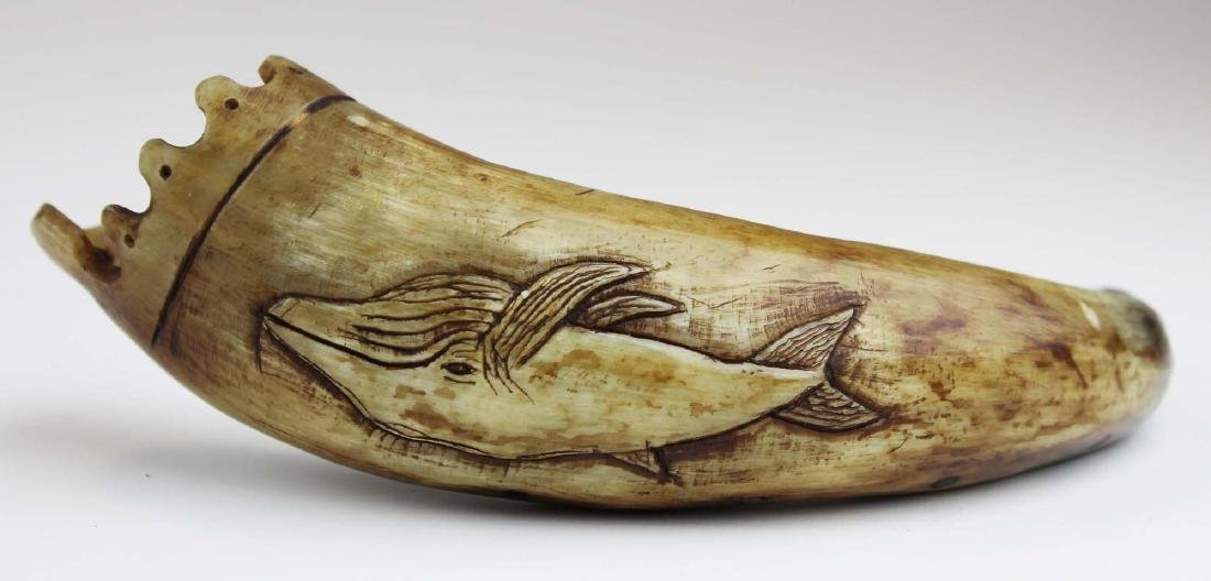 19th c scrimshaw sperm whale powder horn