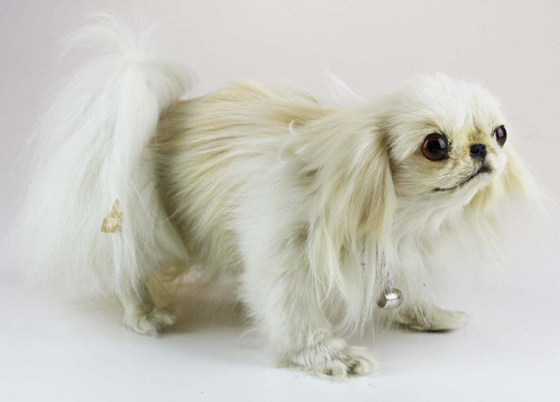Maltese mounted dog