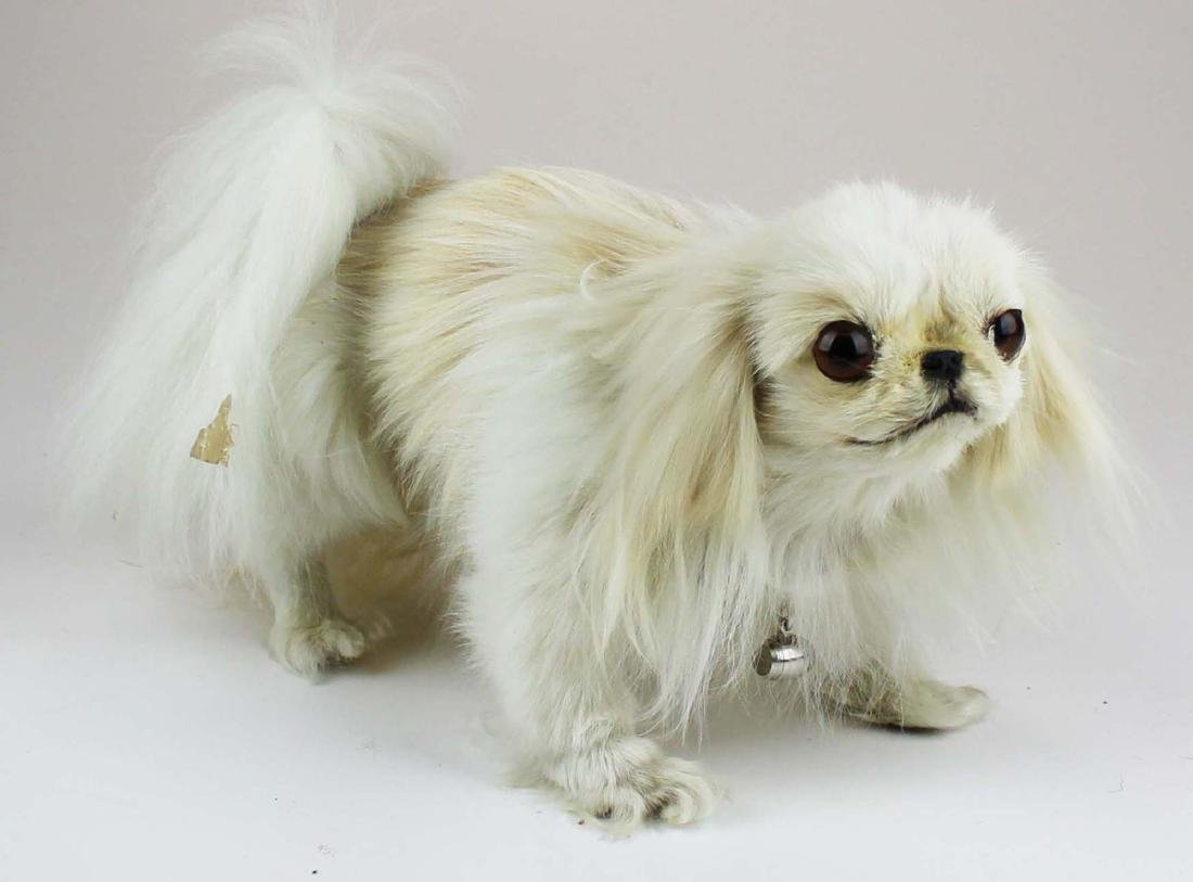 Maltese mounted dog - 5