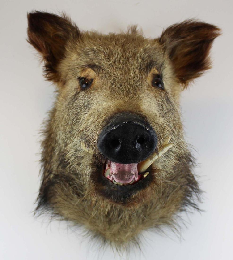 Boar head shoulder mount