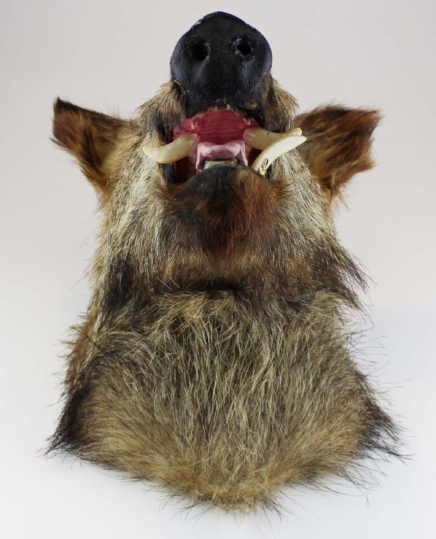 Boar head shoulder mount - 5