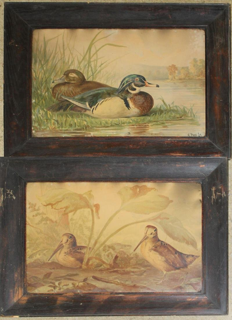 Pair of A Pope chromolithograph sporting bird pictures