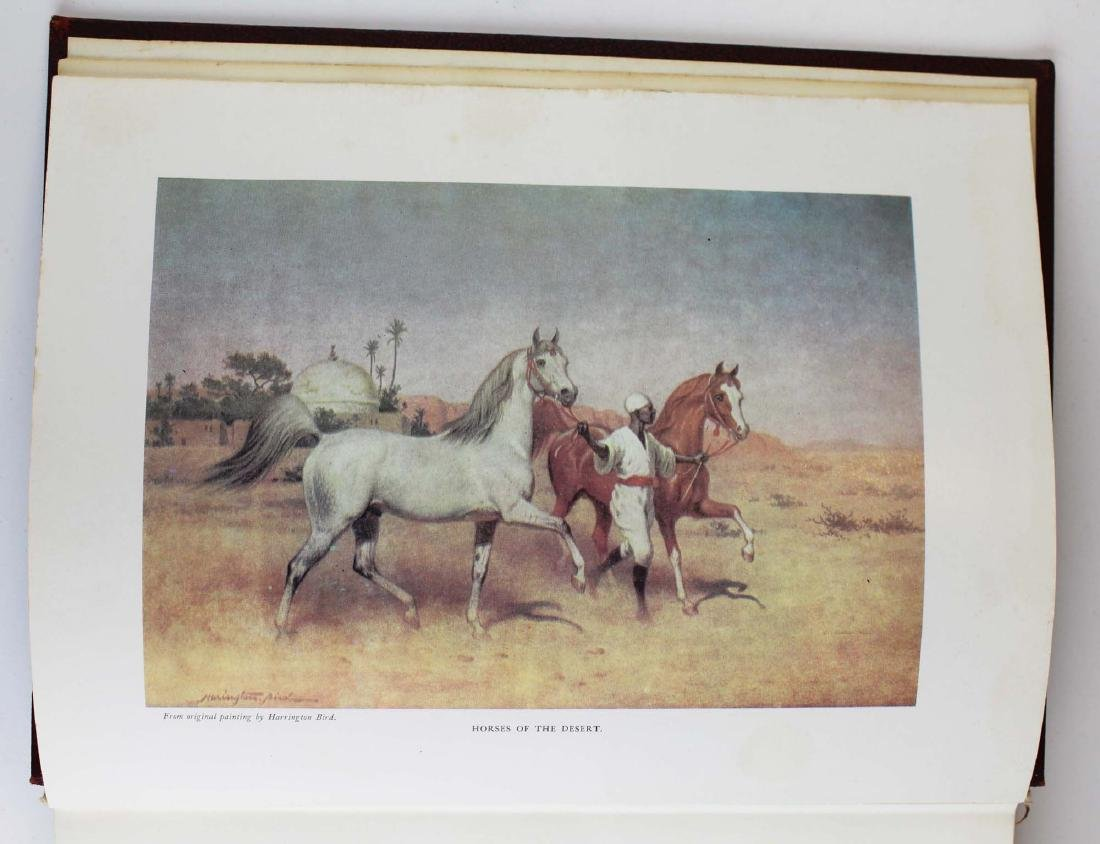 three reference books on Arabian horses - 11