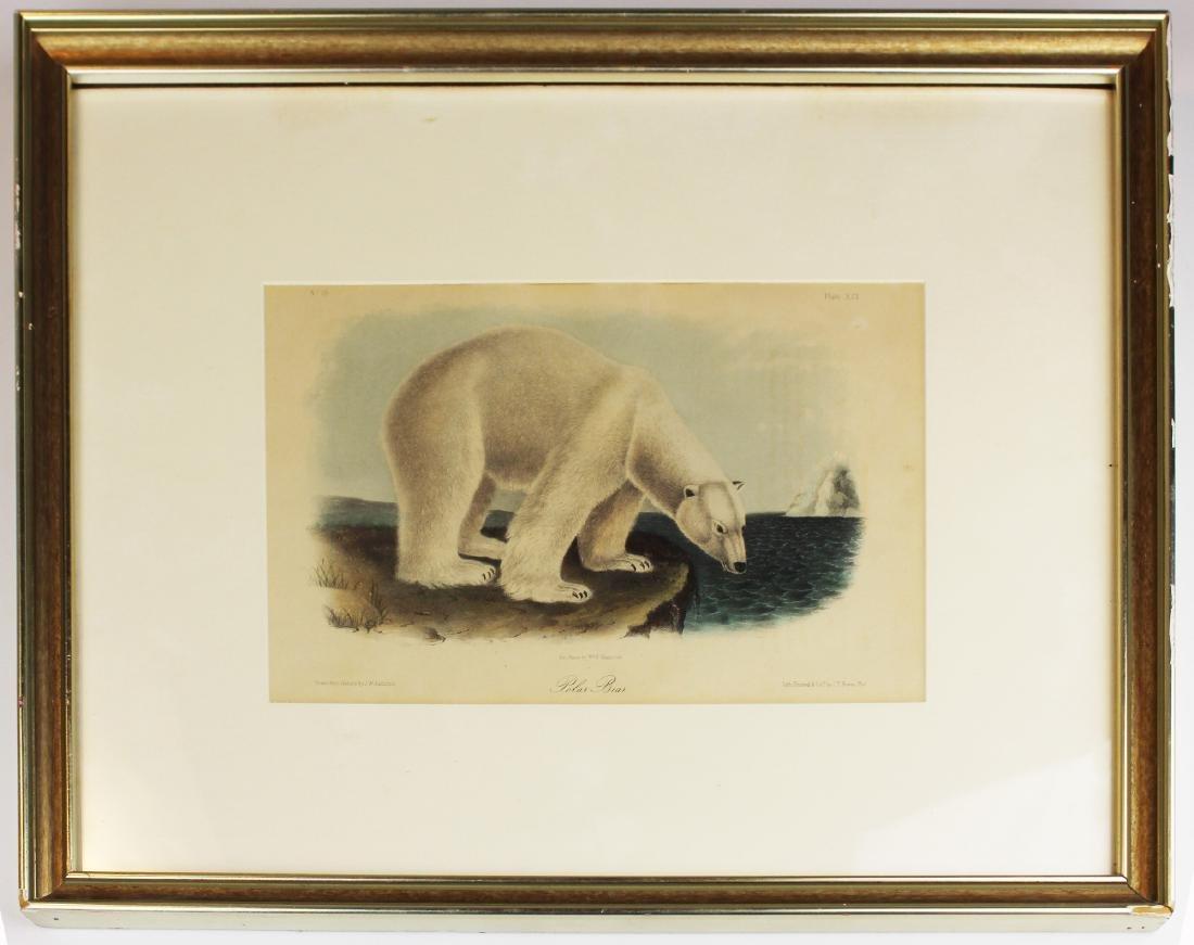19th c Audubon hand colored print of polar bear