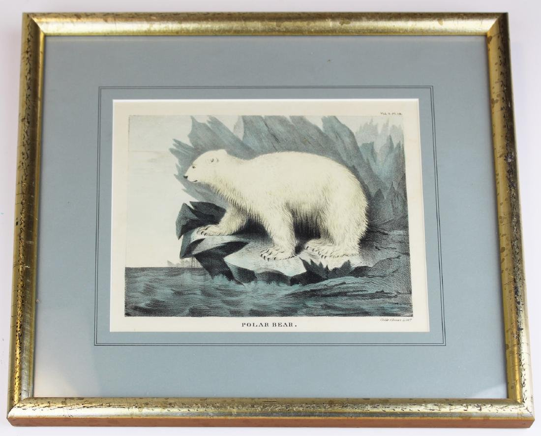 19th c Doughty hand colored print of polar bear