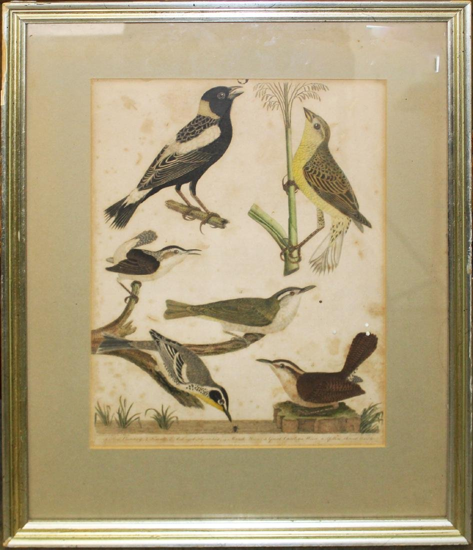 two 19th c Lawson prints of birds