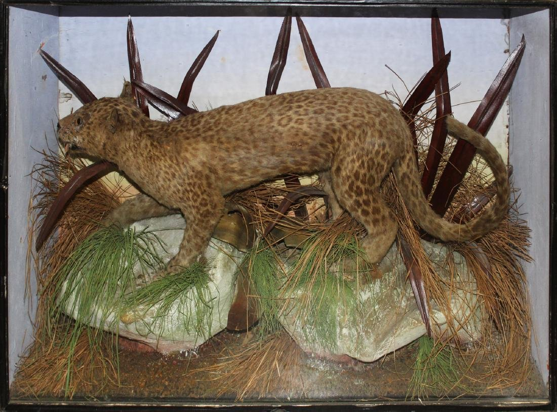 antique taxidermy mount in dovetailed case