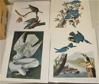 Collection of 20th c Audubon restrikes