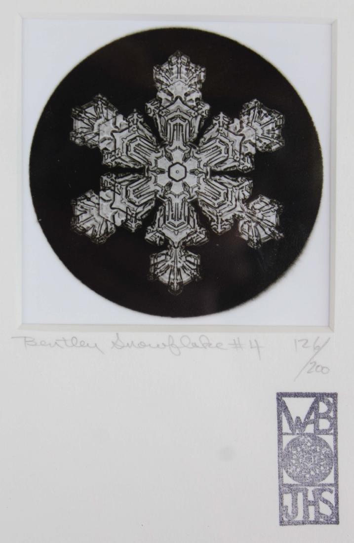 four Snowflake Bentley photographs - 2