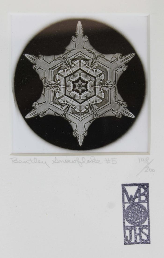 four Snowflake Bentley photographs - 5