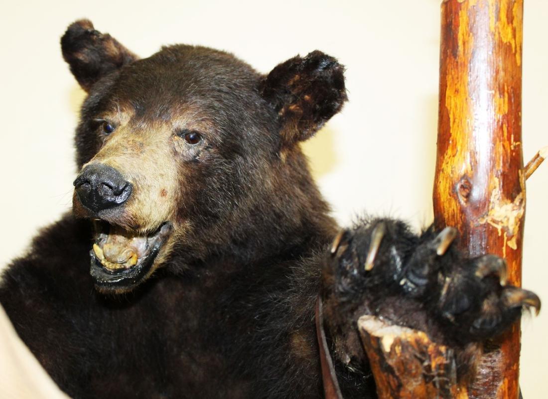 Standing bear taxidermy floor lamp - 7