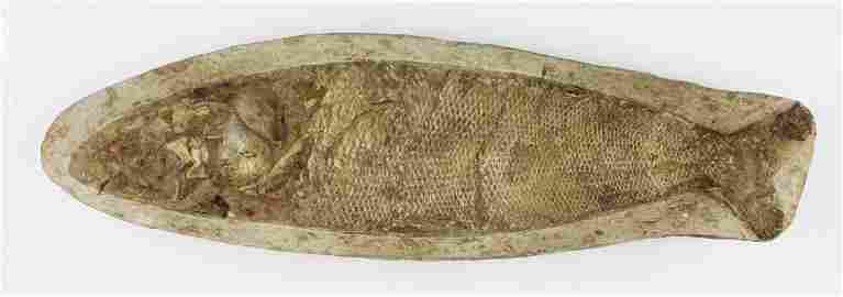 fossilized smooth scale fish