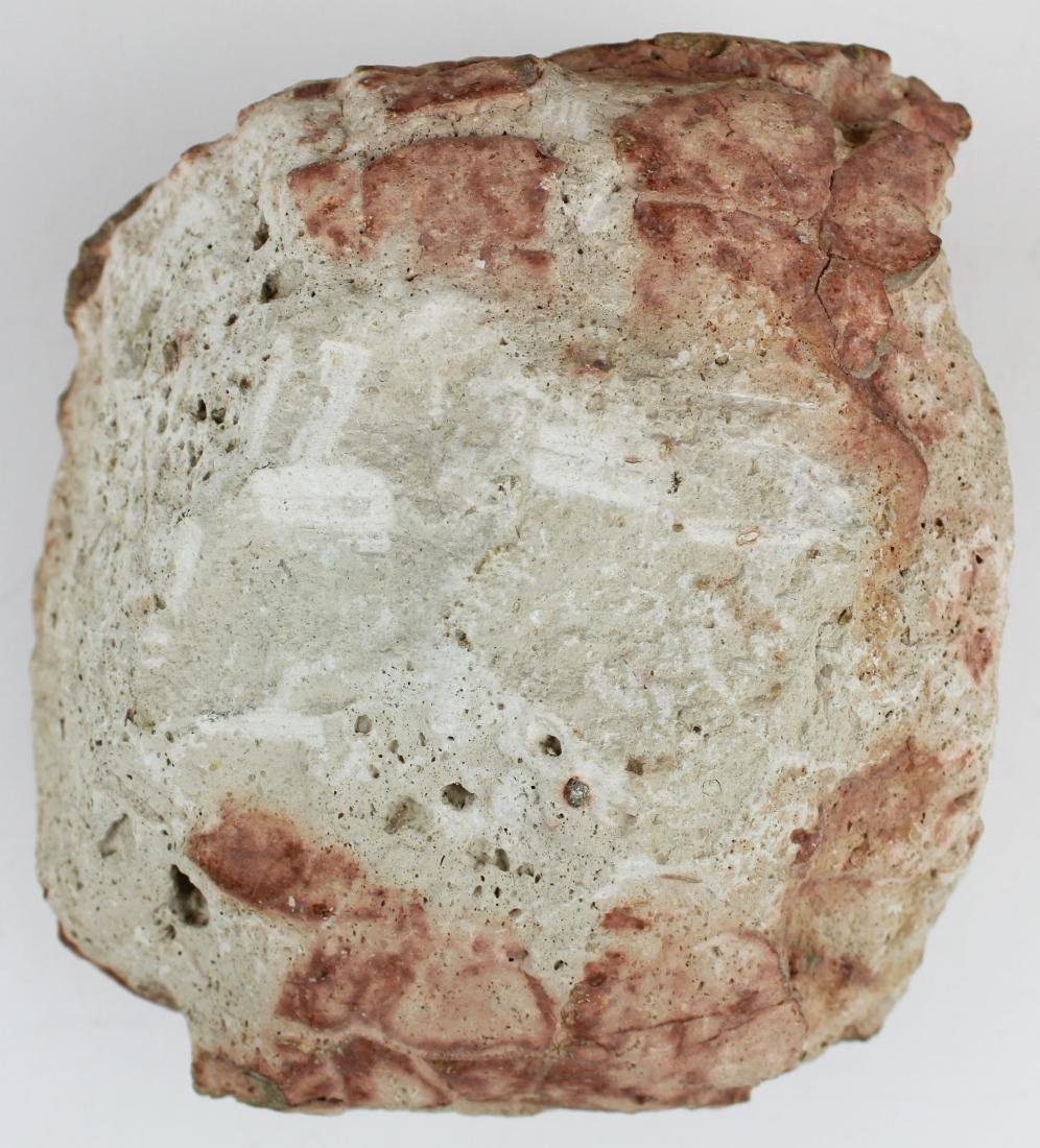 fossil turtle shell in matrix - 6