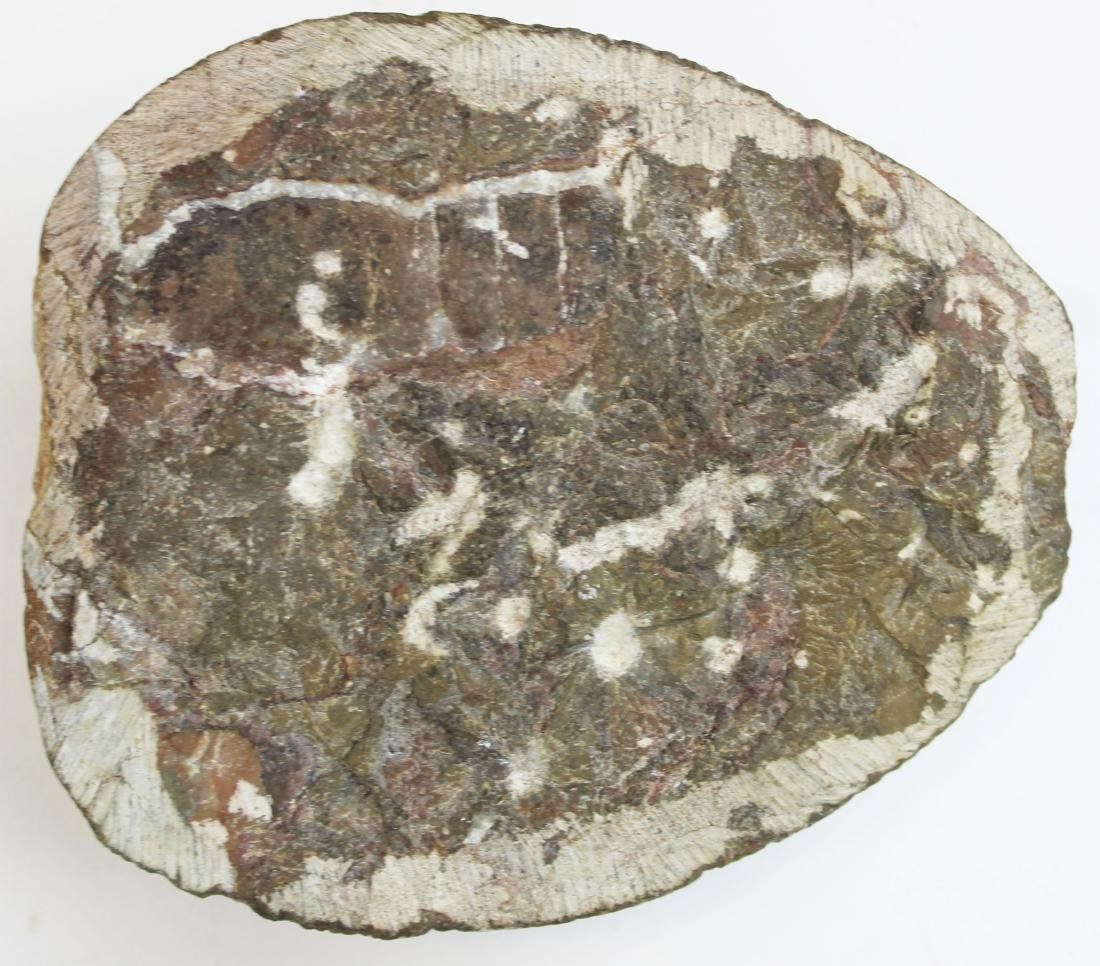 rock, fossil, zoological specimens - 4